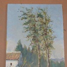 Arte: ANONIMO OLEO SOBRE TABLA DE GRAN CALIDAD. 55 CM X 40 CM.. Lote 26705812