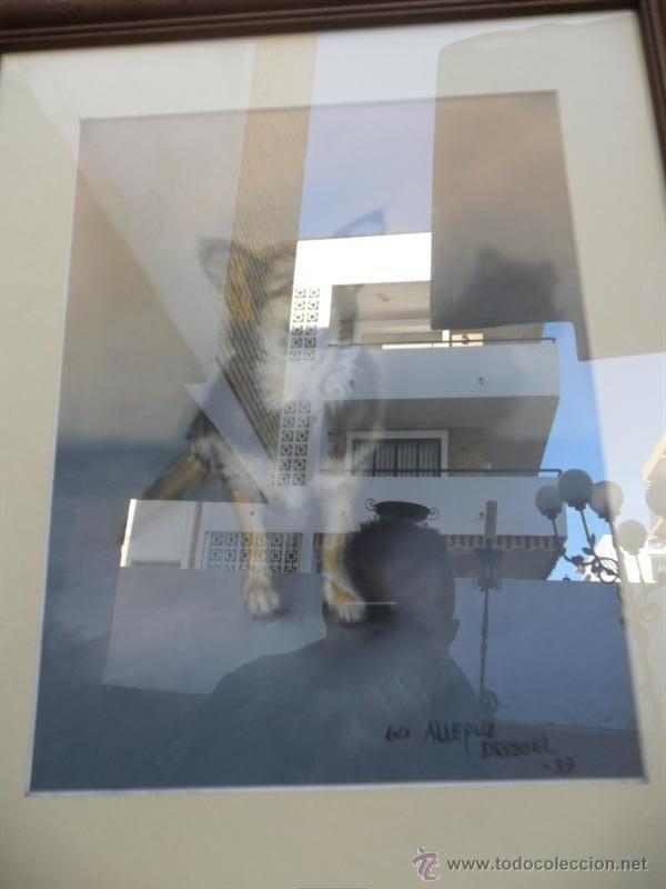 Arte: pintura perro - Foto 2 - 40665704