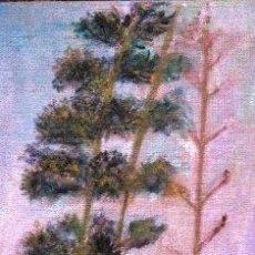 Arte: PITAS EN EL PEÑON DEL CUERVO. MALAGA. ACRILICO SOBRE ARPILLERA Y BATIDOR. DIMENSIONES: 120 CM X 60 C. Lote 42486208