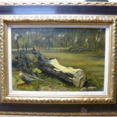 Arte - Tronco caido.Cuadro al oleo sobre tabla,enmarcado , medidas con marco 47 x 37 cm - 48342135