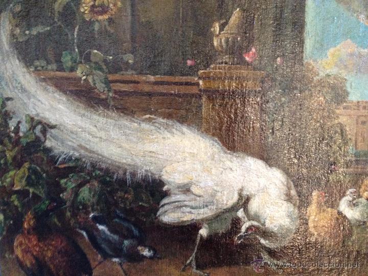 Arte: ANÓNIMO Europeo - Siglo XVIII - Oleo sobre tela - Animales - Foto 2 - 51551099