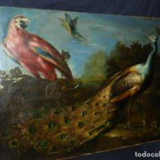 Arte: PRECIOSO OLEO BODEGON S.XVIII - PAJAROS ( RENTELADO ) , 98 X 73 CM, VER FOTOGRAFIAS. Lote 121316071
