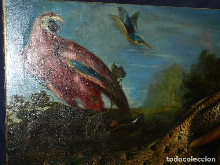 Arte: PRECIOSO OLEO BODEGON S.XVIII - PAJAROS ( RENTELADO ) , 98 X 73 CM, VER FOTOGRAFIAS - Foto 4 - 121316071