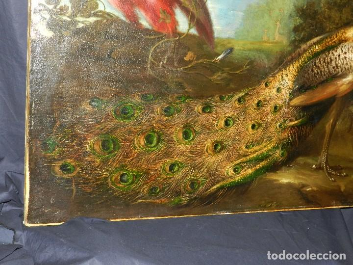 Arte: PRECIOSO OLEO BODEGON S.XVIII - PAJAROS ( RENTELADO ) , 98 X 73 CM, VER FOTOGRAFIAS - Foto 5 - 121316071