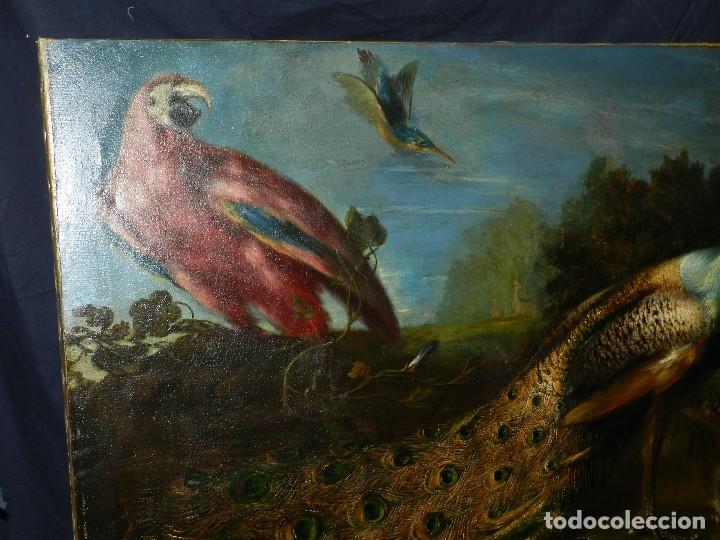 Arte: PRECIOSO OLEO BODEGON S.XVIII - PAJAROS ( RENTELADO ) , 98 X 73 CM, VER FOTOGRAFIAS - Foto 6 - 121316071