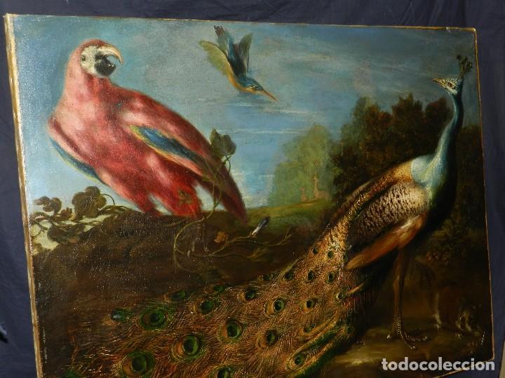Arte: PRECIOSO OLEO BODEGON S.XVIII - PAJAROS ( RENTELADO ) , 98 X 73 CM, VER FOTOGRAFIAS - Foto 9 - 121316071