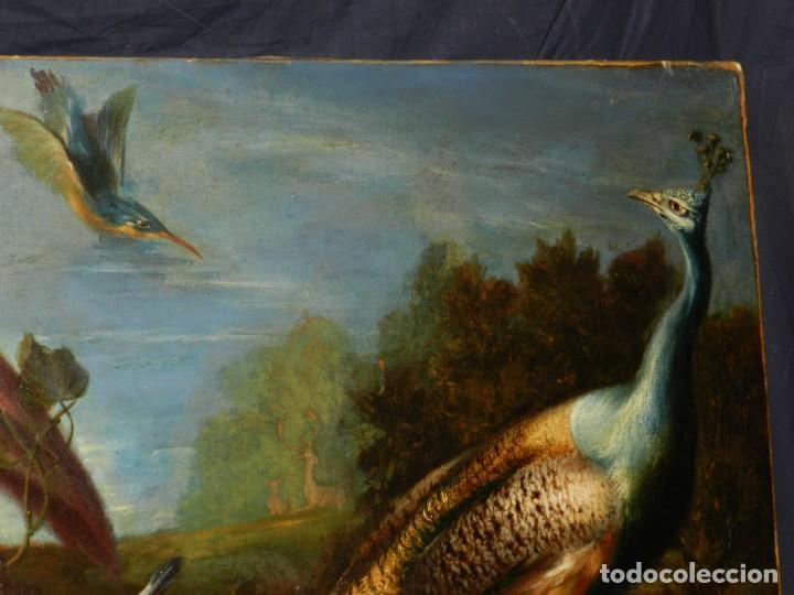 Arte: PRECIOSO OLEO BODEGON S.XVIII - PAJAROS ( RENTELADO ) , 98 X 73 CM, VER FOTOGRAFIAS - Foto 11 - 121316071
