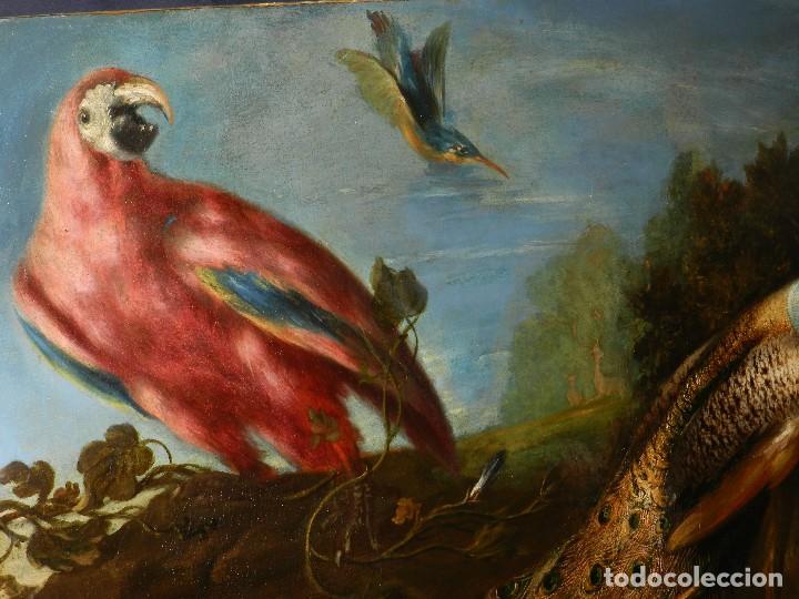 Arte: PRECIOSO OLEO BODEGON S.XVIII - PAJAROS ( RENTELADO ) , 98 X 73 CM, VER FOTOGRAFIAS - Foto 14 - 121316071