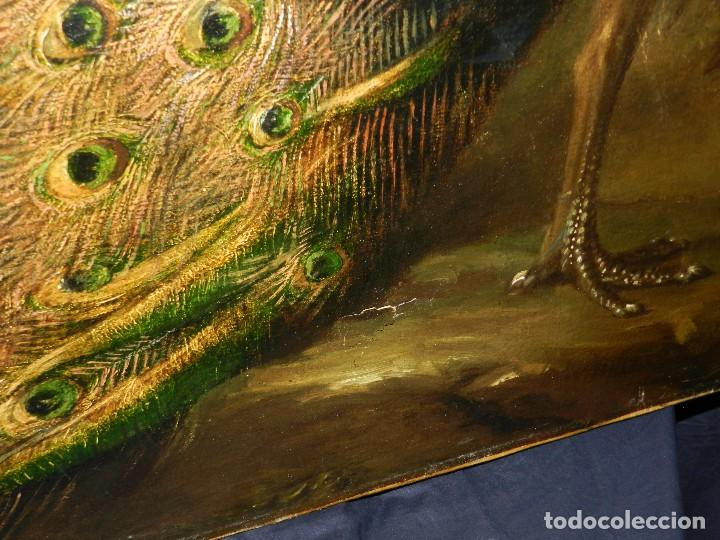 Arte: PRECIOSO OLEO BODEGON S.XVIII - PAJAROS ( RENTELADO ) , 98 X 73 CM, VER FOTOGRAFIAS - Foto 16 - 121316071