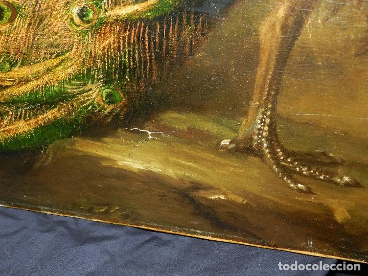 Arte: PRECIOSO OLEO BODEGON S.XVIII - PAJAROS ( RENTELADO ) , 98 X 73 CM, VER FOTOGRAFIAS - Foto 17 - 121316071