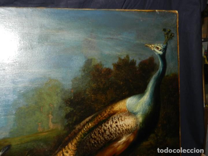 Arte: PRECIOSO OLEO BODEGON S.XVIII - PAJAROS ( RENTELADO ) , 98 X 73 CM, VER FOTOGRAFIAS - Foto 19 - 121316071