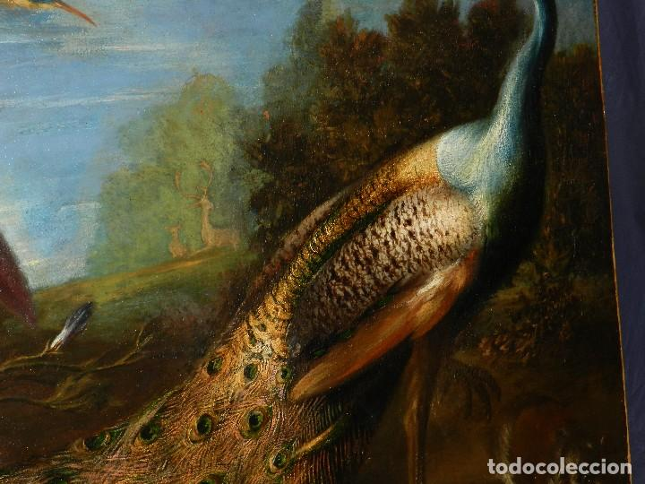 Arte: PRECIOSO OLEO BODEGON S.XVIII - PAJAROS ( RENTELADO ) , 98 X 73 CM, VER FOTOGRAFIAS - Foto 20 - 121316071