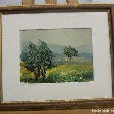 Arte: OLEO FIRMADO SEGRELLES CON MARCO. Lote 139754494