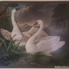 Arte: FOLLOWER OF THE FLEMISH SCHOOL OF THE SIXTEENTH CENTURY: SWANS. OIL ON CANVAS. 142 X 166 CM. Lote 140697786
