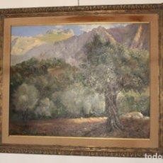 Arte: OLEO SOBRE LIENZO ESCUELA MALLORQUINA OLIVOS. Lote 142899102