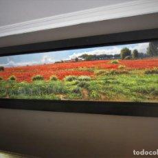 Arte: MARAVILLOSA PINTURA AL OLEO (CARLOS SEMPERE). Lote 144449602