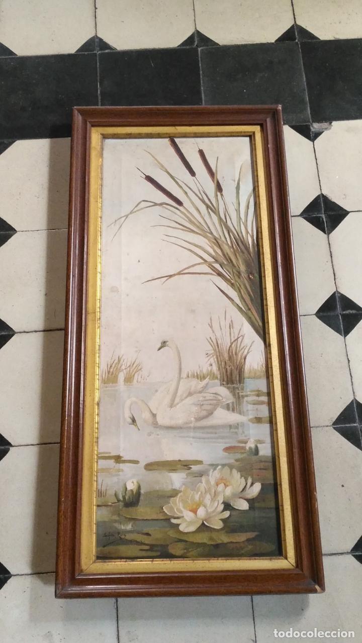 Arte: gran lienzo oleo CISNE enmarcado marco madera y contramarco pan de oro fino firmado 1909 sofia ruiz - Foto 4 - 152136418