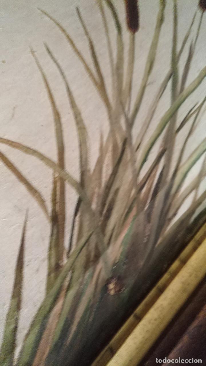 Arte: gran lienzo oleo CISNE enmarcado marco madera y contramarco pan de oro fino firmado 1909 sofia ruiz - Foto 8 - 152136418