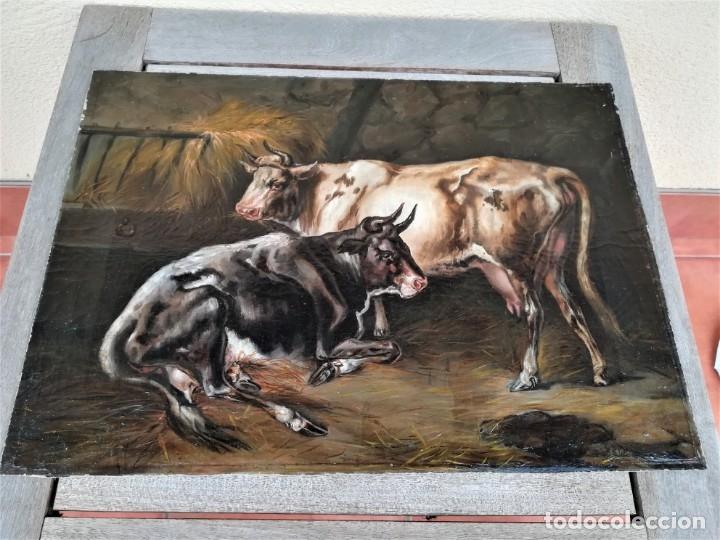 Arte: PINTURA AL OLEO BRITANICA SIGLO XIX,GANADO EN ESTABLO,FIRMADO G.WEBILL,TORO-BUEY,EPOCA VICTORIANA - Foto 11 - 174630348