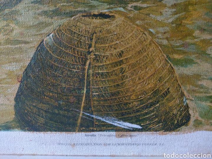 Arte: CUADRO ( SOROLLA - LABORT. FERRER ), ÚNICO! PESCADORES VALENCIANOS. - Foto 5 - 177403664