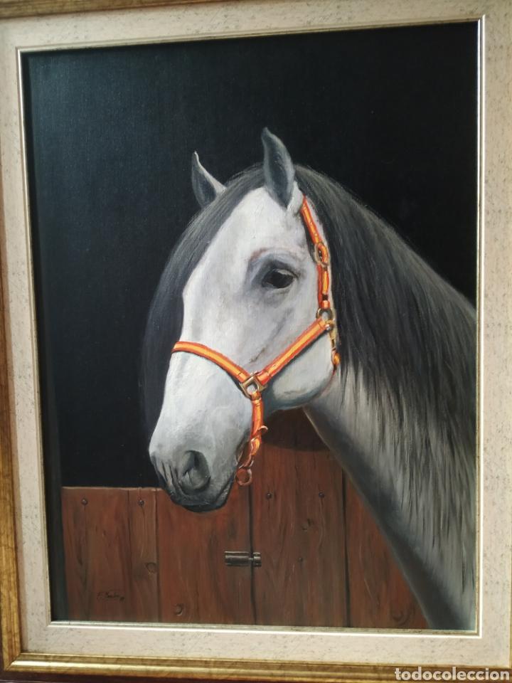 Arte: Óleo sobre lienzo. Caballo de 61x46 - Foto 2 - 181166142