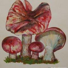 Arte: MICOLOGÍA (SETAS): HYGROPHORUS RUSSULA - ORIGINAL 3/4. Lote 181560785