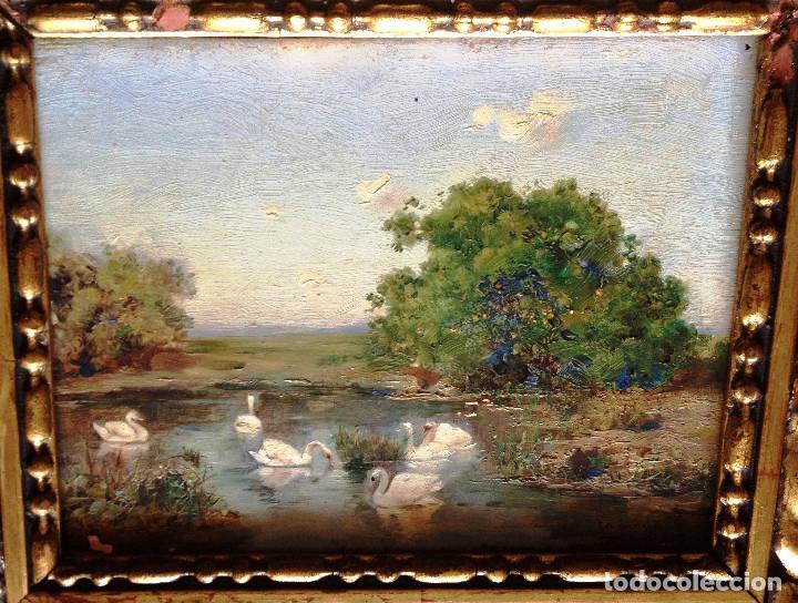 OLEO SOBRE TABLA S. XIX- FIRMADO CAMOYANO- CISNES (Arte - Pintura - Pintura al Óleo Moderna siglo XIX)