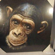 Arte: OLEO SOBRE LIENZO CHIMPANCE. Lote 192254786