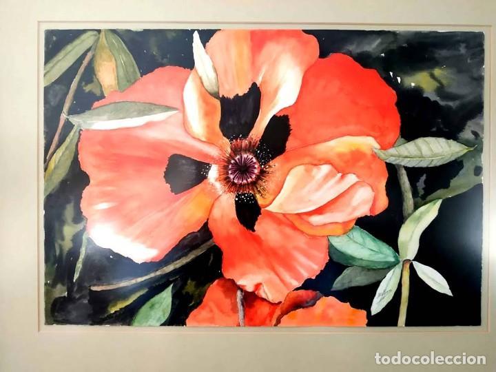 AMAPOLA LINDISIMA AMAPOLA M.SOS ACUARELA (Arte - Pintura Directa del Autor)