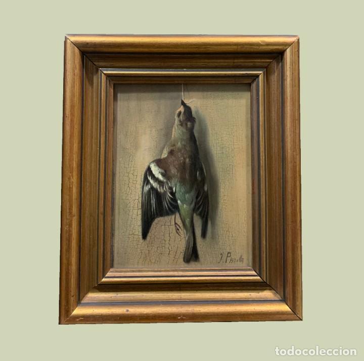 IMPRESIONANTE ESTORNINO MUERTO, JUAN PADILLA Y LARA (Arte - Pintura - Pintura al Óleo Moderna sin fecha definida)