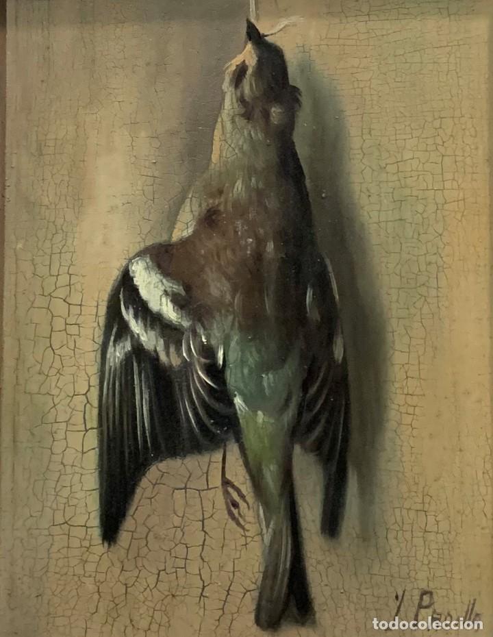 Arte: IMPRESIONANTE ESTORNINO MUERTO, JUAN PADILLA Y LARA - Foto 2 - 194867858