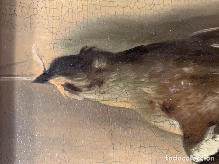 Arte: IMPRESIONANTE ESTORNINO MUERTO, JUAN PADILLA Y LARA - Foto 3 - 194867858