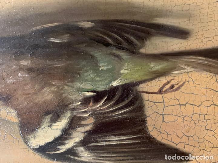 Arte: IMPRESIONANTE ESTORNINO MUERTO, JUAN PADILLA Y LARA - Foto 4 - 194867858