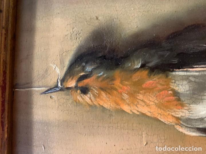 Arte: IMPRESIONANTE PETIRROJO MUERTO, JUAN PADILLA Y LARA - Foto 3 - 194868095