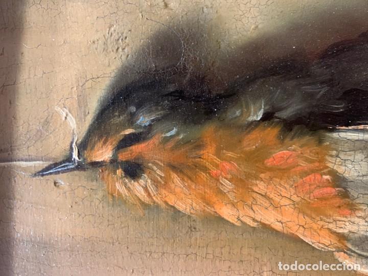 Arte: IMPRESIONANTE PETIRROJO MUERTO, JUAN PADILLA Y LARA - Foto 7 - 194868095