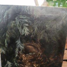 Arte: NATURALEZA MUERTA NIDO ABANDONADO AMY BROOKE. Lote 210373815
