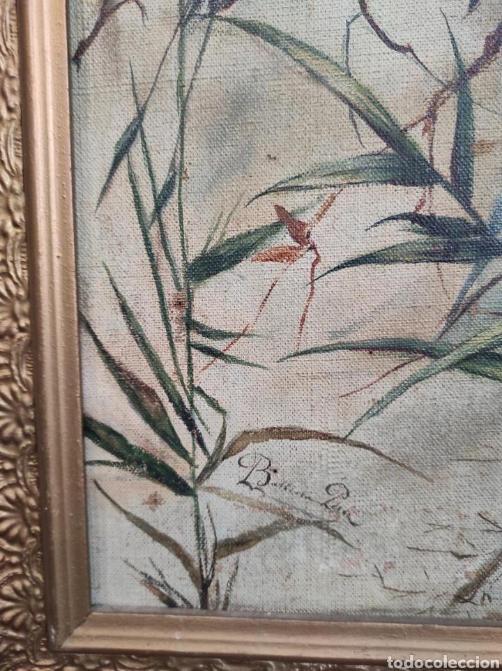 Arte: Escuela española siglo XIX, oleo sobre lienzo. Aves y plantas. 70x41cm Firmado. - Foto 7 - 231640870