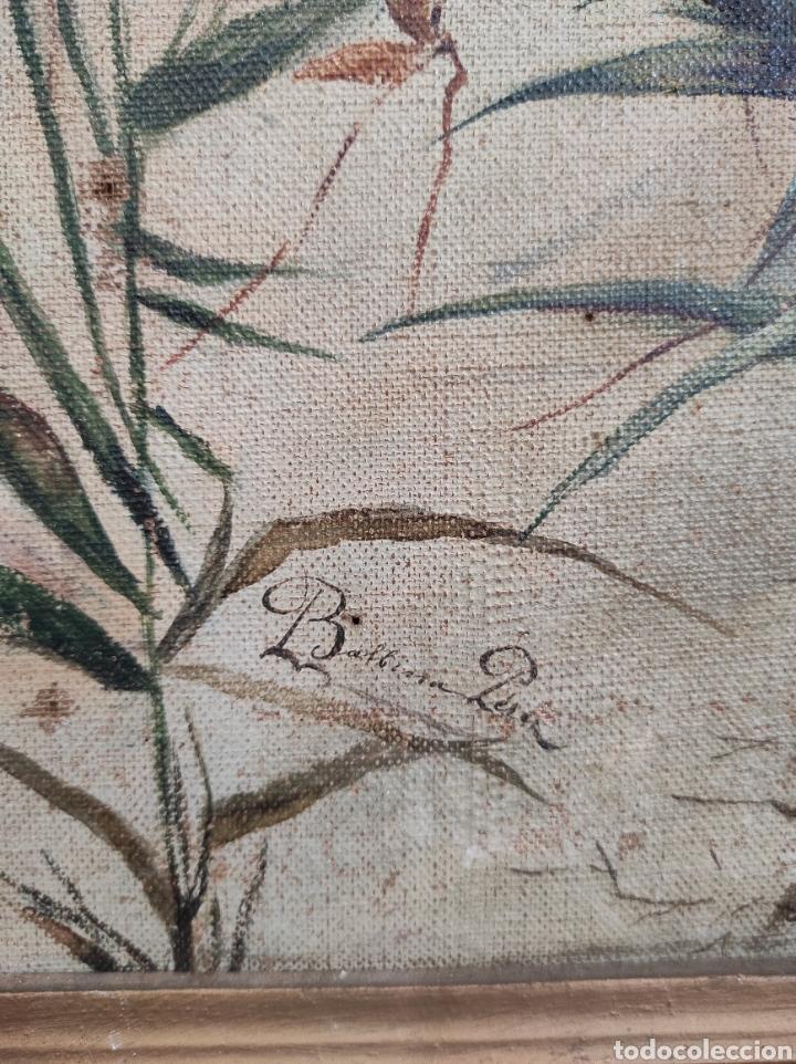 Arte: Escuela española siglo XIX, oleo sobre lienzo. Aves y plantas. 70x41cm Firmado. - Foto 9 - 231640870