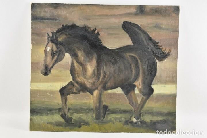 MARAVILLOSO RETRATO OLEO MAGNIFICO SEMENTAL CABALLO AÑO 1930 43X 49 CM (Arte - Pintura - Pintura al Óleo Contemporánea )