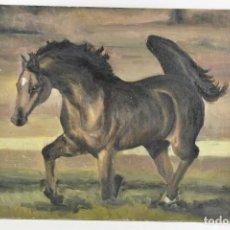 Arte: MARAVILLOSO RETRATO OLEO MAGNIFICO SEMENTAL CABALLO AÑO 1930 43X 49 CM. Lote 240951100