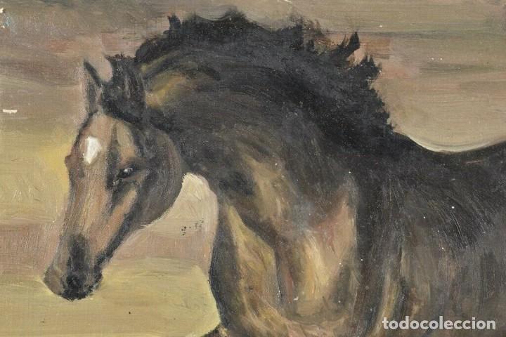 Arte: MARAVILLOSO RETRATO OLEO MAGNIFICO SEMENTAL CABALLO AÑO 1930 43X 49 cm - Foto 5 - 240951100