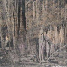Arte: BOSQUE MISTERIOSO. 1986. TÉCNICA MIXTA SOBRE CARTÓN. FIRMADO O. PASCAL. 28 X 29 CM. Lote 244894260