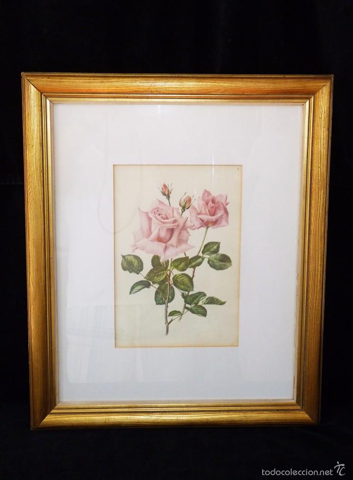 lámina enmarcada flores. rosas. marco dorado 56 - Comprar ...