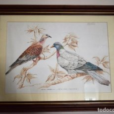 Arte: LOTE DE DOS CUADROS DE AVES. Lote 113395495