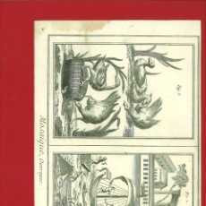Arte: BERNARD DIREXIT. GRABADO SIGLO XVIII: MOSAIQUE, OUVRAGES. Lote 180116488