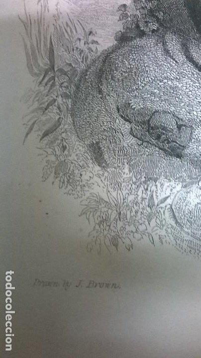 Arte: Grabado.Medida 26x37 cm. - Foto 3 - 184401045