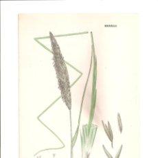 Arte: 1086. SOWERBY. PSAMMA ARENARIA. Lote 193251053
