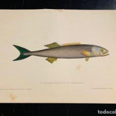 Arte: LITOGRAFIA DE 1876 LES POISSONS - LOS PECES - GERVAIS ET BOULART - TÉTRAGONURE DE CUVIER - PEZ LIMA. Lote 235548205