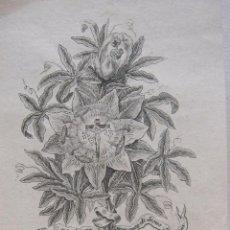 Arte: TOMÁS ROCAFORT . PLANTAD EN VUESTROS CORAZONES A JESÚS. GRABADO, HACIA 1800. 11,5 X 7,5 CM. Lote 275948133