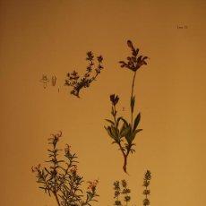 Arte: BOTÁNICA.PLANTAS.FLORES.. Lote 23175209